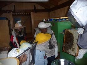 Ve včelím království